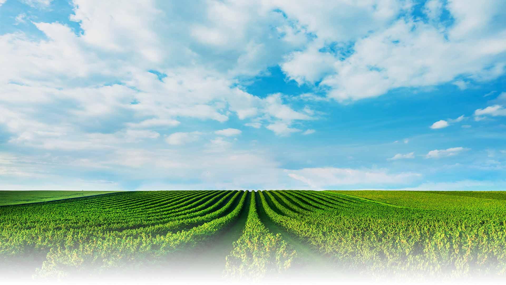 地平線に広がる青空と畑:イメージ